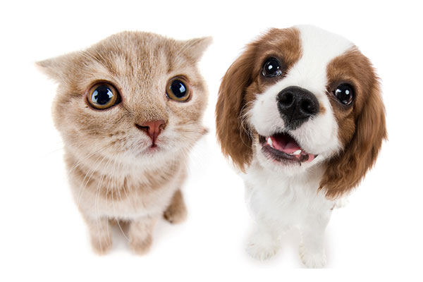 pet-insurance-img